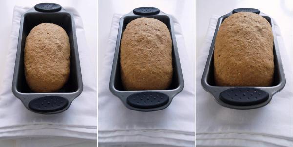 Compassionate Cuisine - Receitas vegetarianas - Pão caseiro de farinha de trigo integral