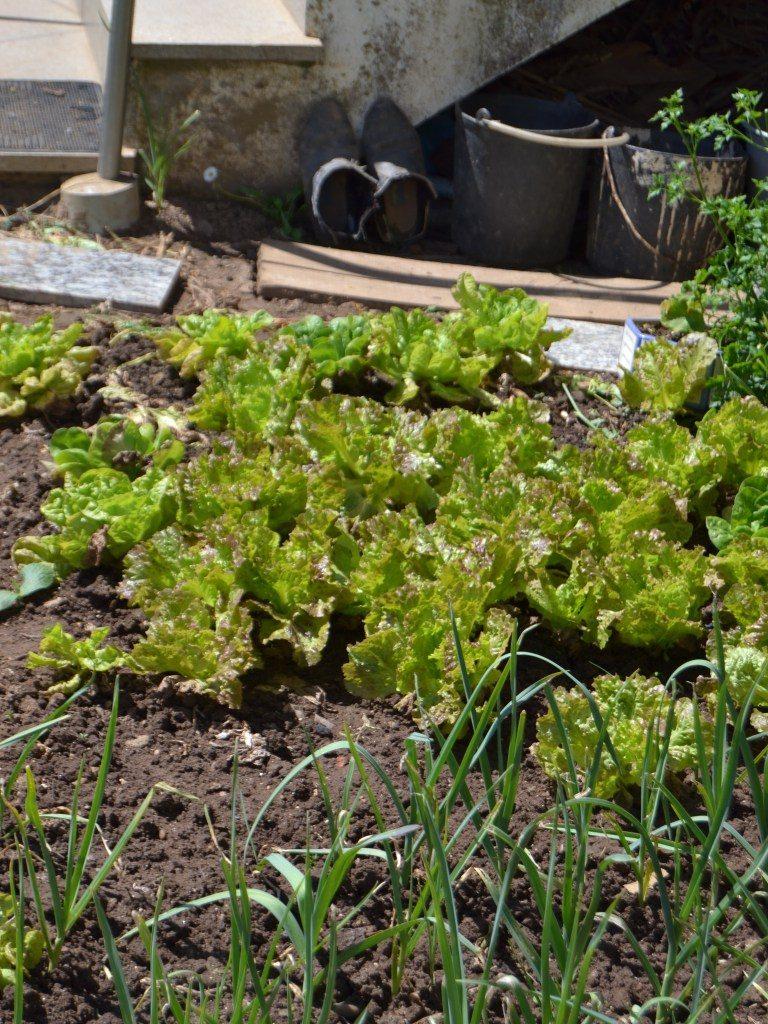 Compassionate Cuisine - Receitas vegetarianas - Salada de quinoa com espargos e folhas verdes