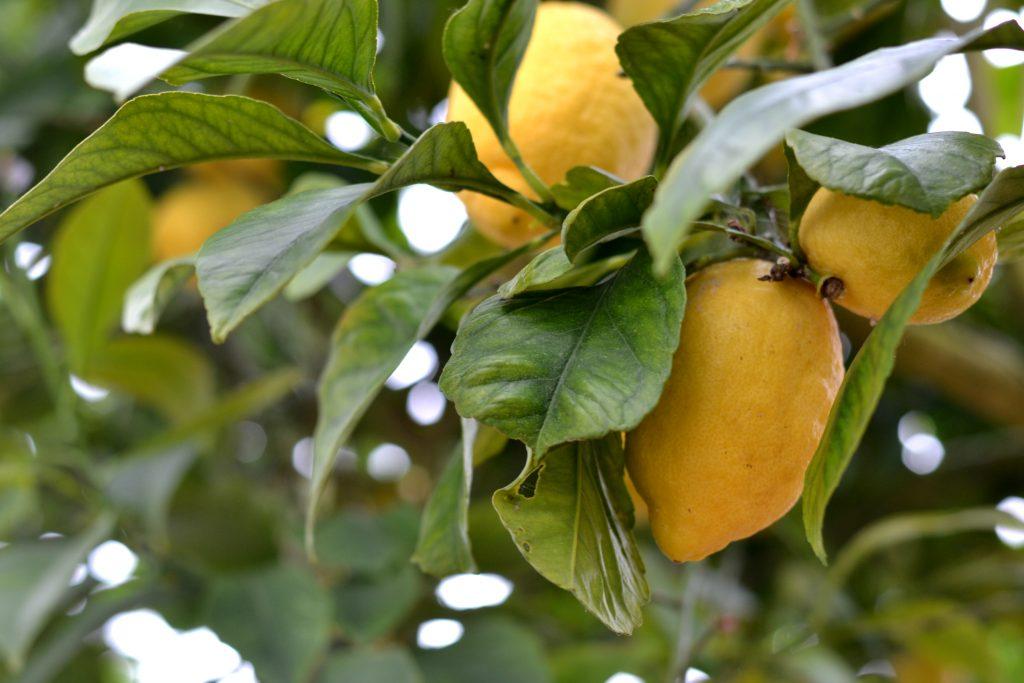 Compassionate Cuisine - Receitas vegetarianas - Tarte de Limão