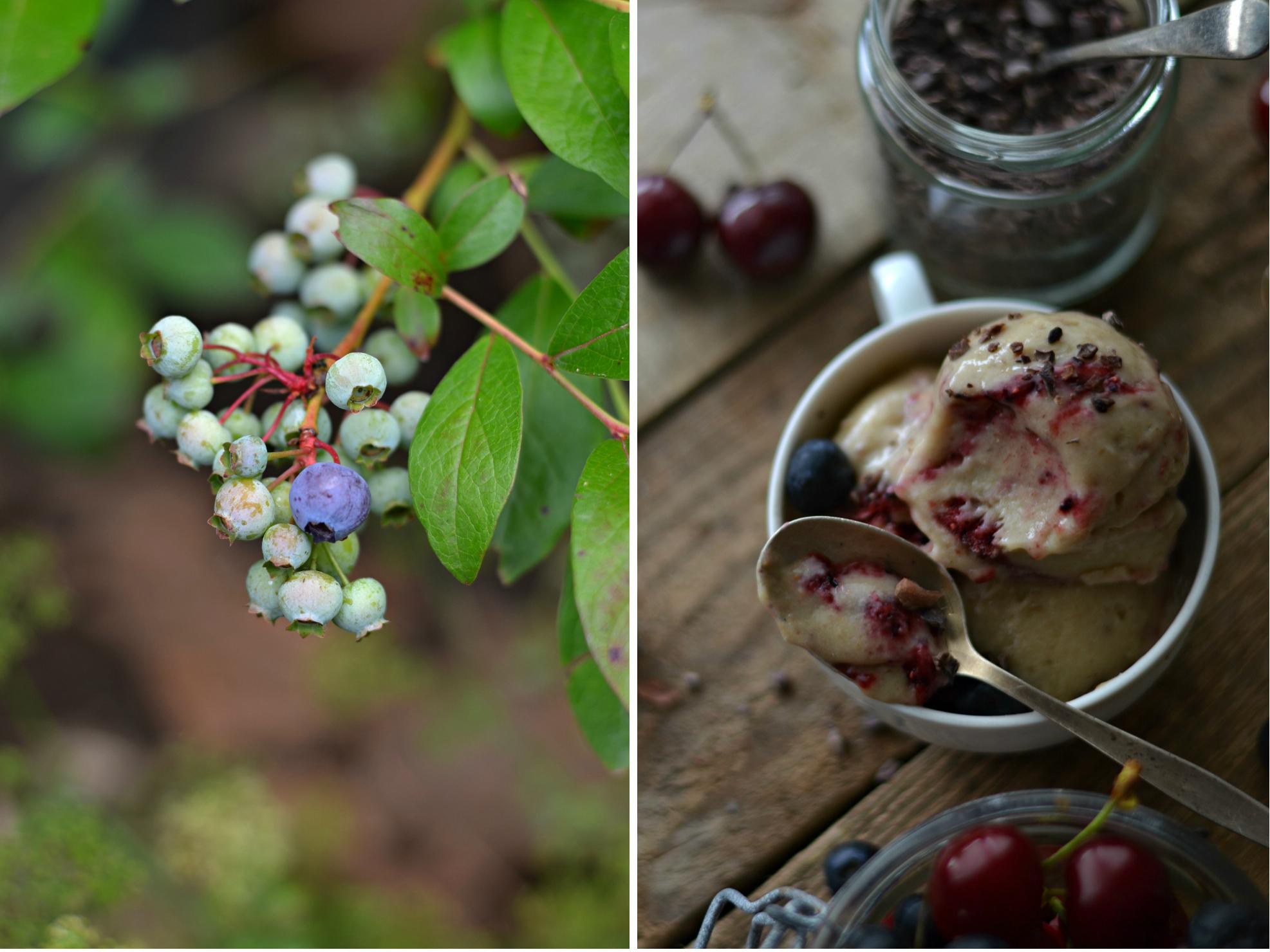 blueberry ice cream1