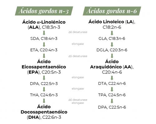 Figura 1: Esquema que traduz a conversão do ALA e LA em DHA e DPA (n-6), através de desaturases e elongases, respetivamente. Adaptado de Santos et al. (2020).